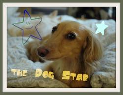The_dog_star